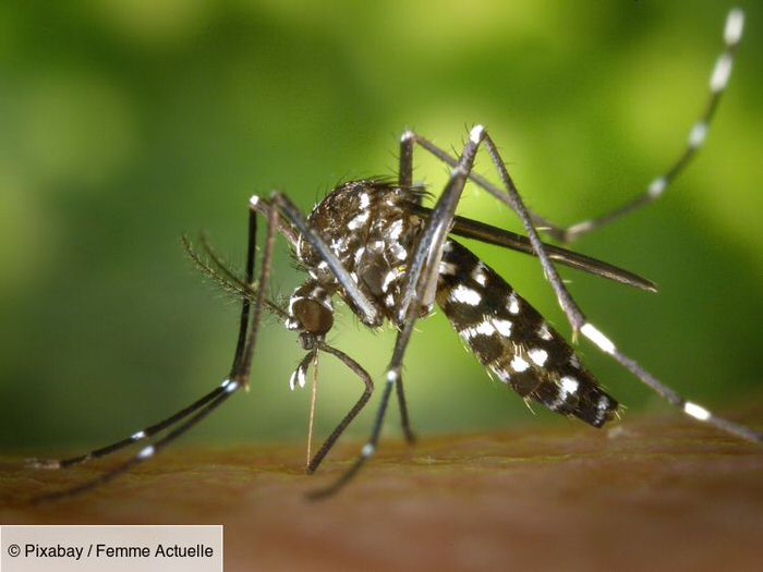 "Tiger mosquitoes: why they could become a ""major health risk"" for all of France"