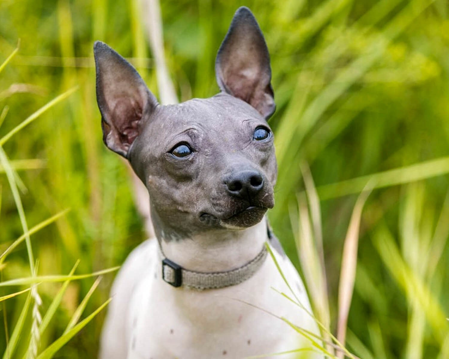 8 new dog breeds that almost no one knows about